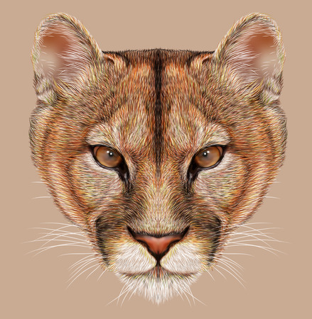 Portrait of Mountain Lion. Cuguar Cat. Imagens