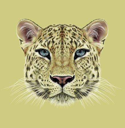animales de la selva: Ilustrativo Retrato de leopardo. Cara linda del leopardo africano con ojos azules.