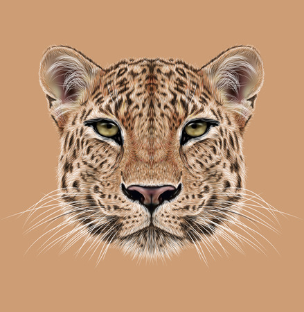 Illustrative Portrait of Leopard. Cute face of African Leopard.