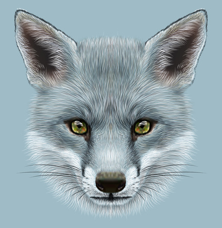 Illustrative Portrait of a Grey Fox. The cute fluffy face of a Fox. 스톡 콘텐츠