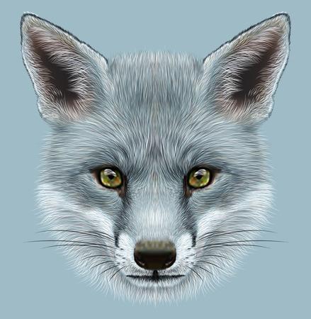 Illustratief Portret van een Grey Fox. De schattige pluizige gezicht van een vos.