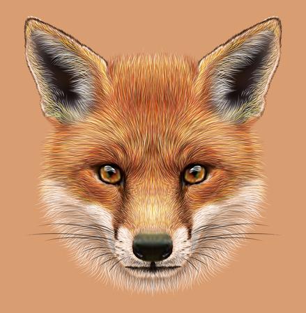 Illustration Portrait d'un renard roux. Le visage de la forêt duveteux Fox. Banque d'images - 44442373