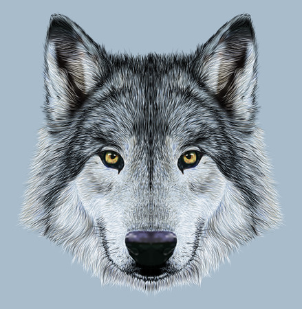 Illustration Portrait of a Wolf. Winter fur color wolf on blue background. 스톡 콘텐츠