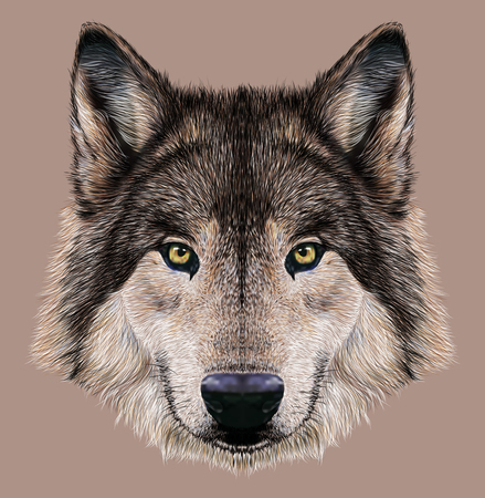 head of animal: Illustration Portrait of a Wolf.