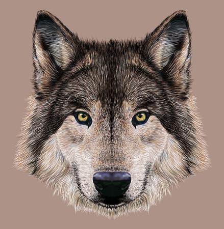 cabeza de mujer: Ilustraci�n Retrato de un lobo. Foto de archivo