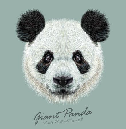 동물: Panda.Cute 매력적인 얼굴 곰 벡터 예시 초상화. 일러스트