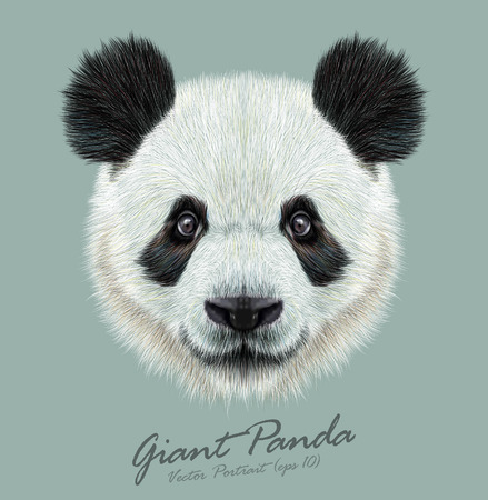 black and white image drawing: Vector Illustrative portrait of Panda.Cute attractive face bears.