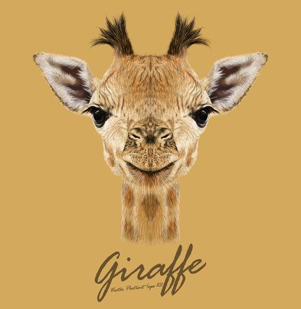 dieren: Vector Illustratief portret van Giraffe.Cute aantrekkelijk gezicht van de jonge giraffe met hoorns.