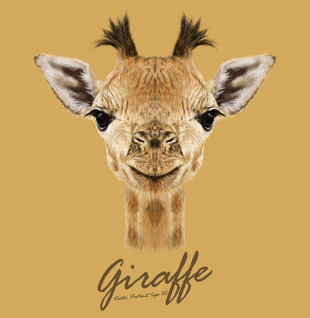 animals in the wild: Vector Illustrative portrait of Giraffe.Cute attractive face of young giraffe with horns.