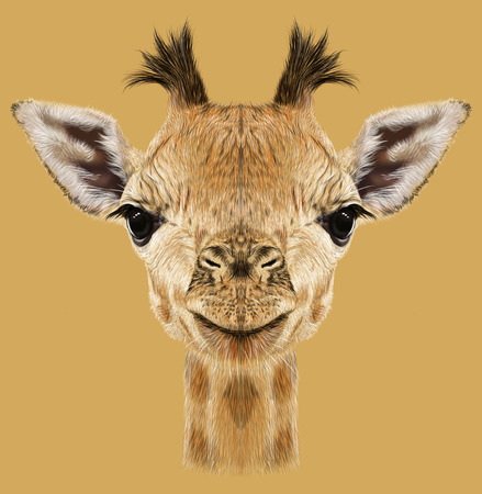 Illustrative portrait of Giraffe.Cute attractive face of young giraffe with horns.