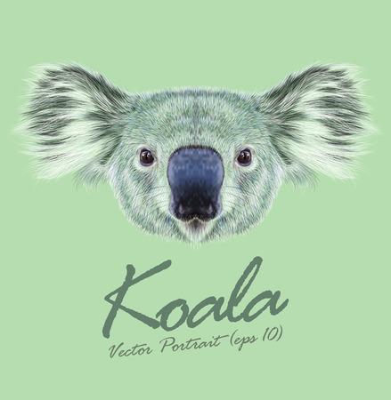 코알라 곰의 벡터 예시 초상화. 호주의 유대류 곰의 귀여운 털이 얼굴.
