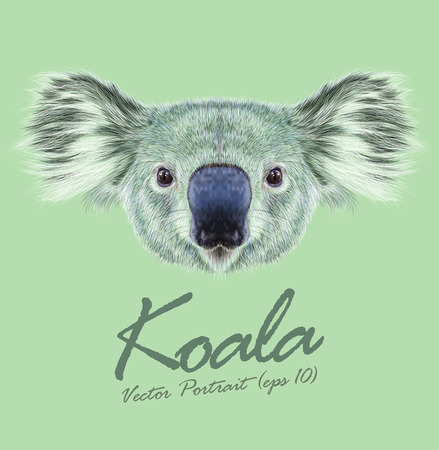 Vector Illustrative Portrait of Koala Bear. Cute fluffy face of Australian marsupial bear.