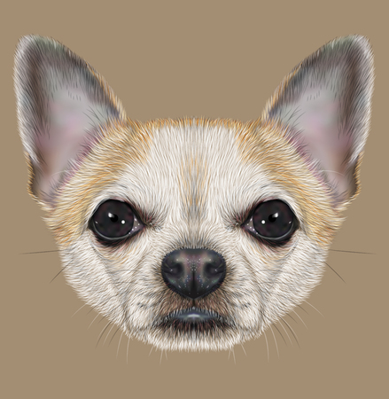 Illustrative Portrait of Chihuahua Dog. Cute Portrait of white short hair dog with golden spots.