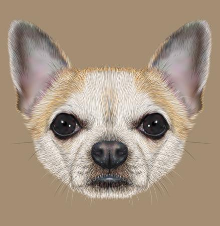 short hair dog: Illustrative Portrait of Chihuahua Dog. Cute Portrait of white short hair dog with golden spots.