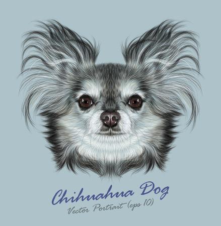 pure breed: Vector Illustrative Portrait of Chihuahua dog. Cute Portrait of Pure Breed Dog on blue background Illustration