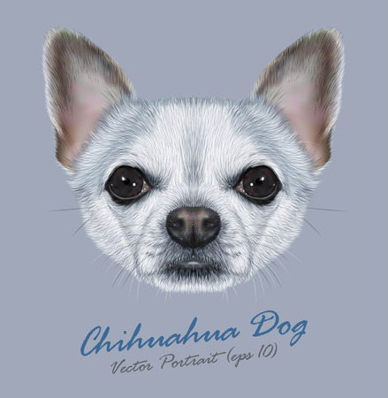 short hair dog: Vector Illustrative Portrait of Chihuahua Dog. Cute Portrait of white short hair dog with silver spots.