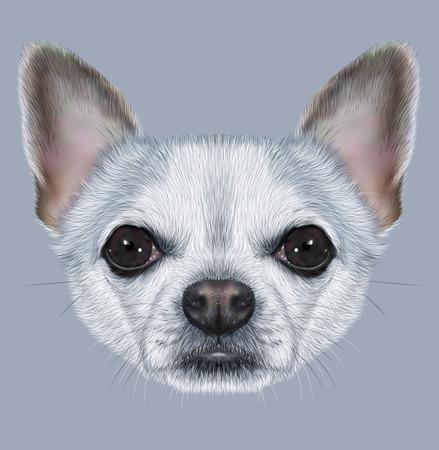 short hair dog: Illustrative Portrait of Chihuahua Dog. Cute Portrait of white short hair dog with silver spots. Stock Photo