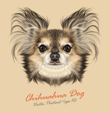 Vector Illustrative Portrait of Chihuahua dog. Cute Portrait of Pure Breed Dog on Yellow background