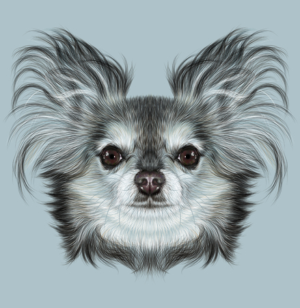 pure breed: Illustrative Portrait of Chihuahua dog. Cute Portrait of Pure Breed Dog on blue background Stock Photo