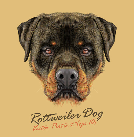 Vector Illustrative portrait of Rottweiler Dog. Bonny portrait of adult Domestic Dog. Ilustração