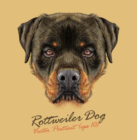 Vector Illustrative portrait of Rottweiler Dog. Bonny portrait of adult Domestic Dog. Vectores
