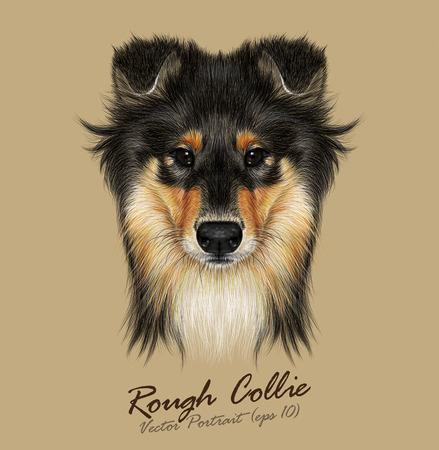Vector Illustrative Portrait of Collie Dog. Cute Face of Mahogany Sable Rough Collie or Shetland Sheepdog Sheltie. Stock Illustratie