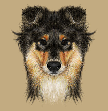 sheepdog: Illustrative Portrait of Collie Dog. Cute Face of Mahogany Sable Rough Collie or Shetland Sheepdog Sheltie.