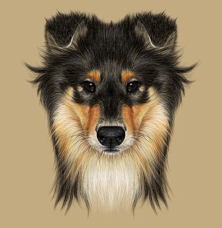 Illustrative Portrait of Collie Dog. Cute Face of Mahogany Sable Rough Collie or Shetland Sheepdog Sheltie.