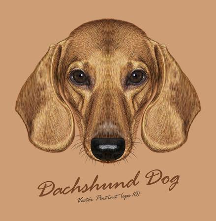 Vector Illustrated Portret van de Hond van de tekkel. Schattige rode kortharige teckel.