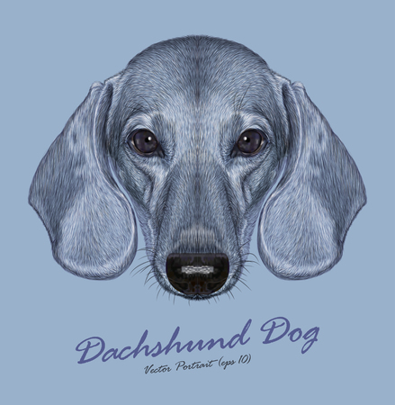 Vector Illustrated Portrait of Dachshund Dog. Cute short haired grey dachshund Izabella.
