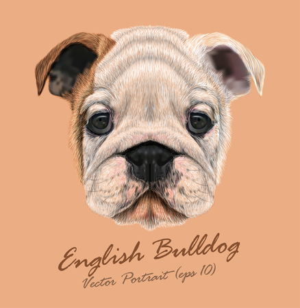 Vector Illustrated portrait of British Bulldog. Cute white  brown face of Puppy.