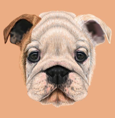 Illustrated portrait of British Bulldog. Cute white  brown face of Puppy.