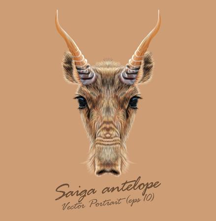animales safari: Antílope estepa de Asia Central y Mongolia.