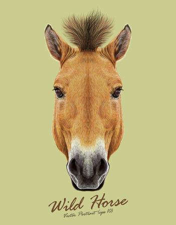 Hoofd van de Przewalski paard. Wild paard van Centraal-Azië.