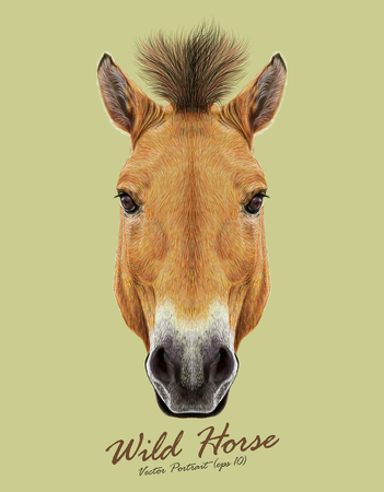 Head of Przewalski's horse. Wild Horse of Central Asia.