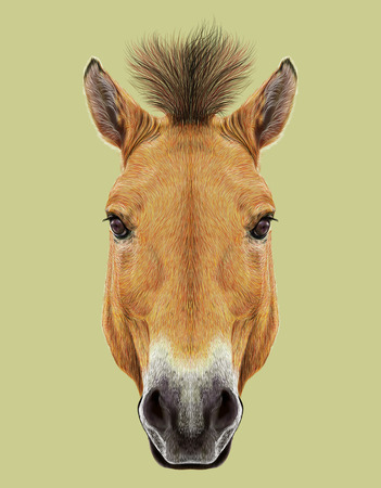kazakhstan: Head of Przewalskis horse. Wild Horse of Central Asia.