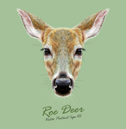 Cute face of a Deer. Roe or Doe  イラスト・ベクター素材