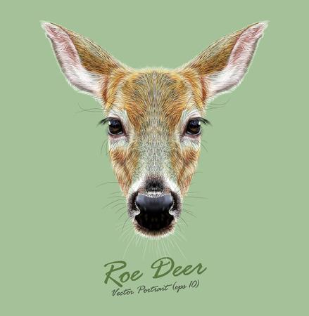 Cute face of a Deer. Roe or Doe Illustration