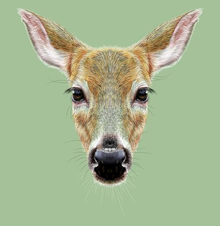 doe: Cute face of Roe or Doe Deer. It is Deer of Eurasia and America.