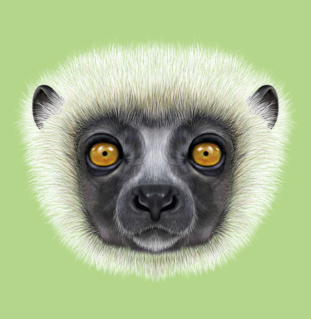 jungle animal: Cara linda del lemur Madagascars 'en el fondo verde
