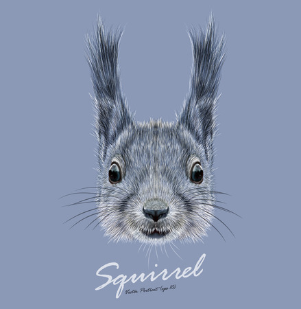 isolated squirrel: Little Cute Squirrel in winter color of coat Illustration
