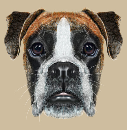 Fawn boxer dog is short-haired dogs developed in Germany. 스톡 콘텐츠
