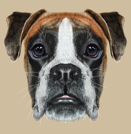perro boxer: Perro del boxeador del cervatillo es perros de pelo corto desarrollados en Alemania.