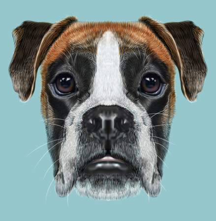 boxer dog: Fawn boxer dog is short-haired dogs developed in Germany. Stock Photo