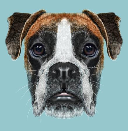 Fawn boxer hond kortharige honden ontwikkeld in Duitsland.