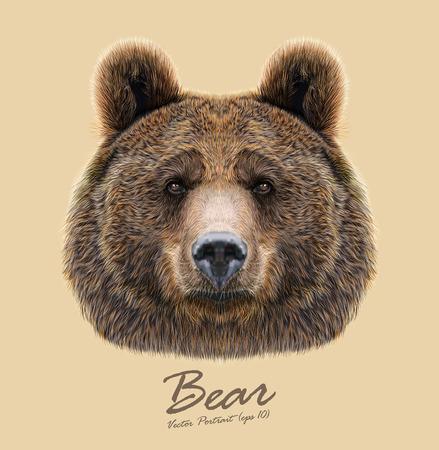 volti: Big Bear del Nord America e dell'Eurasia Vettoriali