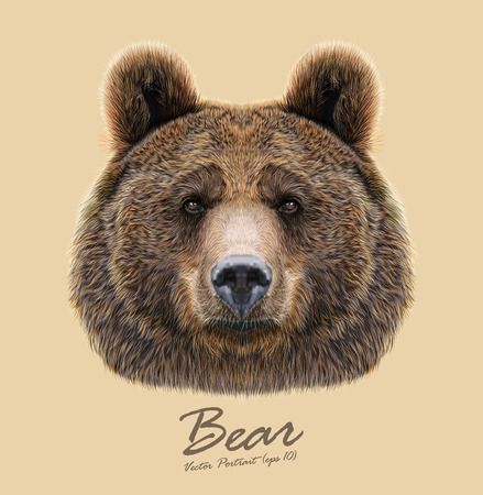 brown hair blue eyes: Big Bear of North America and Eurasia