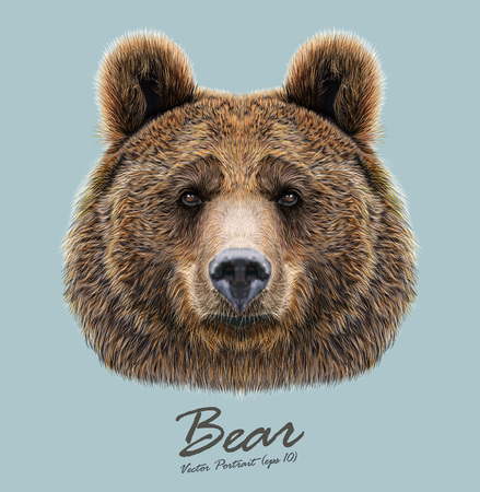 big eyes: Big Bear of North America and Eurasia