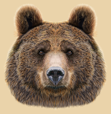 isolated: Big Bear of North America and Eurasia