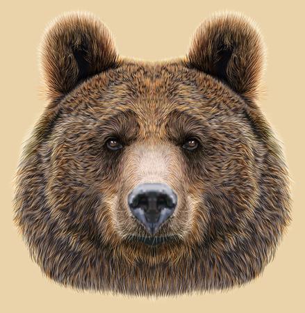 Big Bear van Noord-Amerika en Eurazië Stockfoto - 48662993